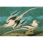 Puzzle  Pomegranate-AA591 White-tailed Tropicbird