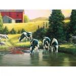 Puzzle  Cobble-Hill-52103 XXL Teile - Douglas Laird - Holsteins