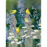 Puzzle  Cobble-Hill-52104 XXL Teile - Susan Bourdet - Goldfinch Quartet