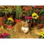 Puzzle  Cobble-Hill-52108 XXL Teile - Autumn Breeze