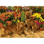 Puzzle   Duck Tollers