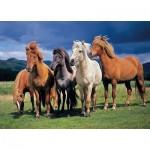 Puzzle  Tactic-53929 Camargue Horses
