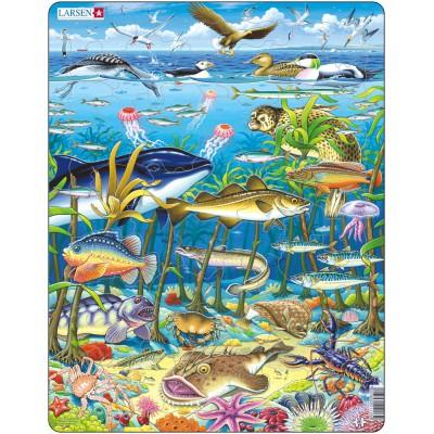 Larsen-FH13 Rahmenpuzzle - Meeresbewohner