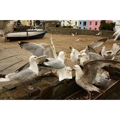 Puzzle James-Hamilton-99009 Gourmet Gulls, Illfracombe, Devon