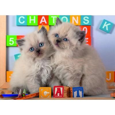 Puzzle Nathan-86861 Kätzchen