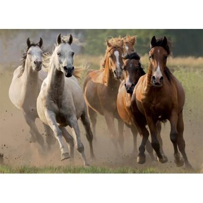 Puzzle Nathan-87561 Herde wilder Pferde