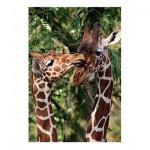 Puzzle  Jumbo-18340 Giraffen
