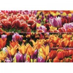 Puzzle  Jumbo-18364 Holländische Tulpen