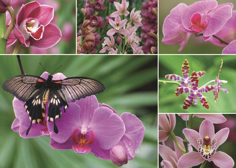 orchideen 1000 teile jumbo puzzle online kaufen. Black Bedroom Furniture Sets. Home Design Ideas