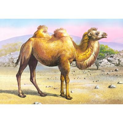 Puzzle Castorland-02405-Z7 Kamel