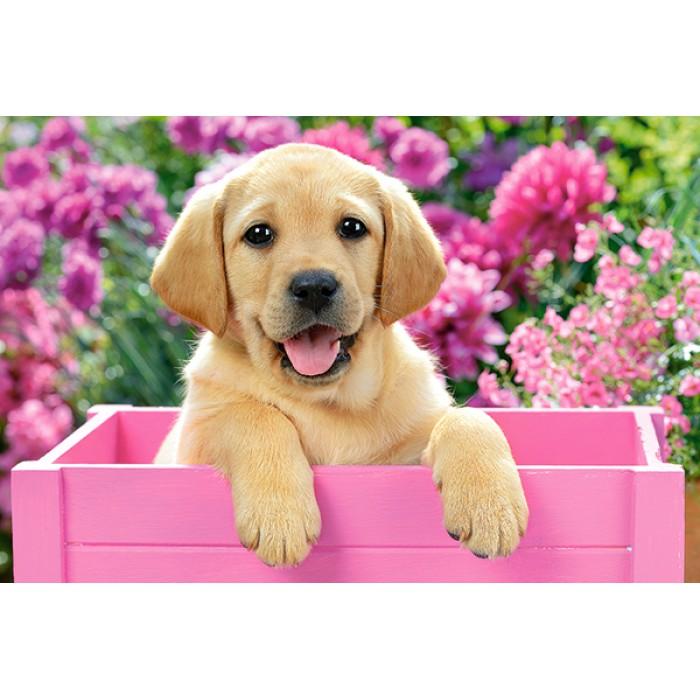 Minipuzzle - Welpe in rosa Kiste