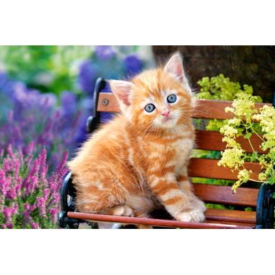 Castorland-08521-Z25 Minipuzzle - Kätzchen auf der Bank
