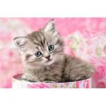Castorland-08521-Z26 Minipuzzle - Kleines graues Kätzchen