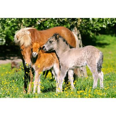 Puzzle Castorland-12909 Ponys auf der Weide