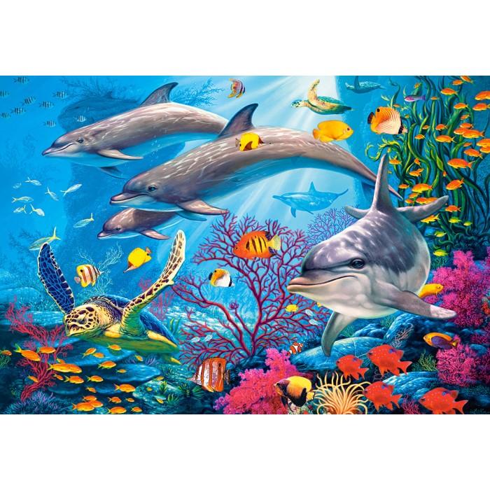 Secrets of The Reef