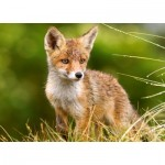 Puzzle  Castorland-27354 Little Fox on the Meadow