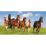 Puzzle  Castorland-400034 Paso Fino Herde