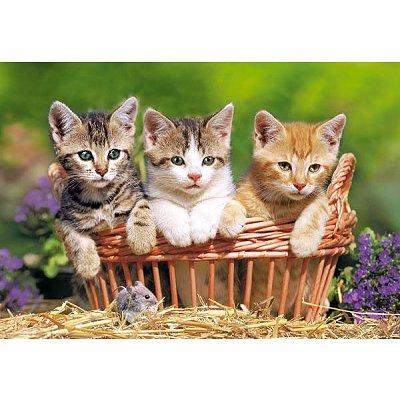 Puzzle Castorland-51168 Drei süße Katzen