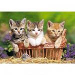 Puzzle  Castorland-51168 3 Kätzchen