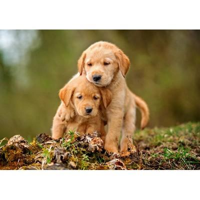 Puzzle Castorland-52271 Puppy Love