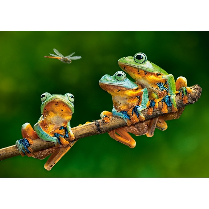 The Frog Companions