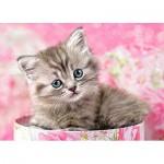Castorland-B-035212 Minipuzzle - Kätzchen im Karton