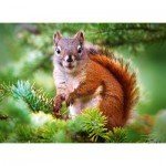 Puzzle   Pine Squirrel