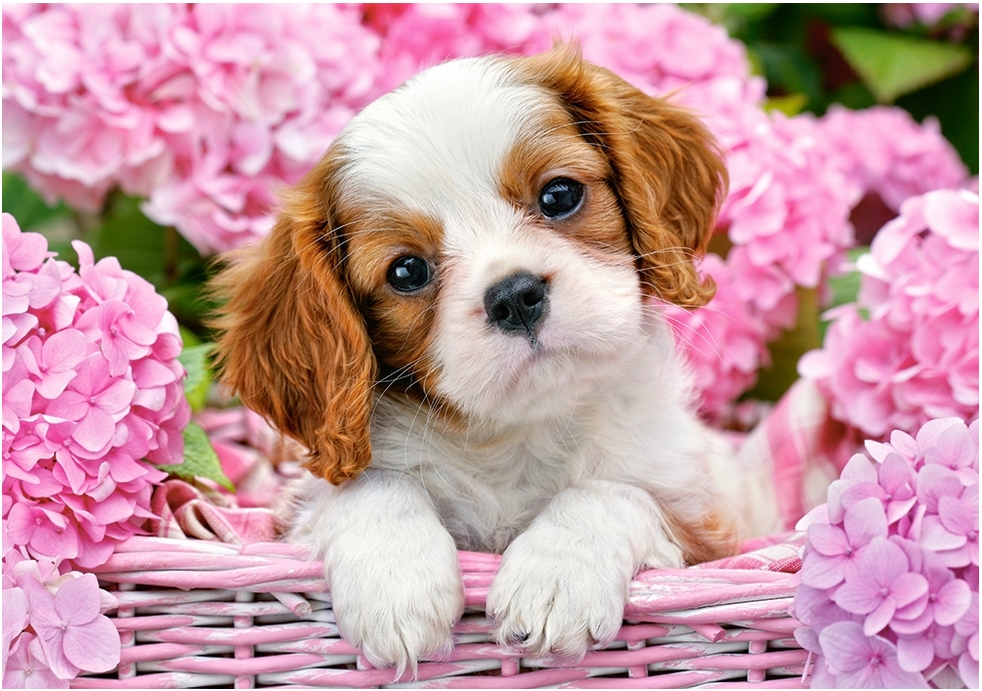 Free Online Jigsaw Puzzles Of Dogs