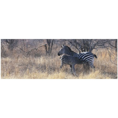 Heye-29469 Puzzle 1000 Teile Panorama - Alexander von Humboldt: Zebrafamilie