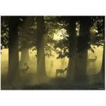 Puzzle  Heye-29497 Magischer Wald