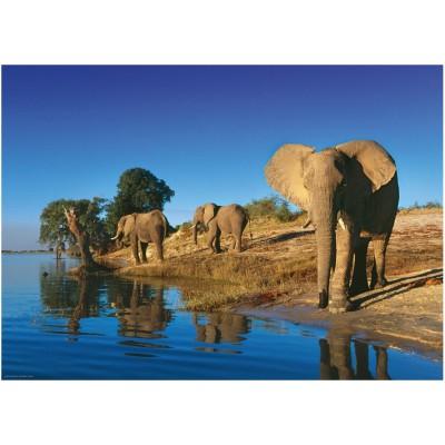 Puzzle Heye-29595 Durstige Elefanten
