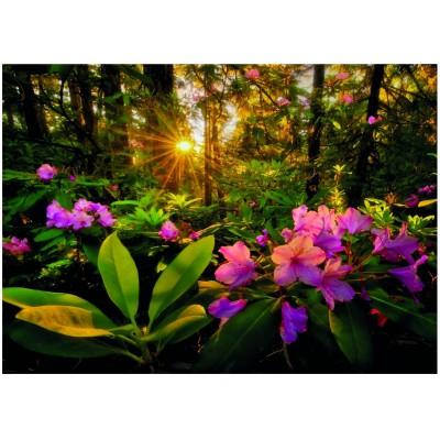 Puzzle Heye-29662 Marc Adamus: Rhododendron