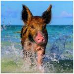 Puzzle  Heye-29746 Paradise Pig