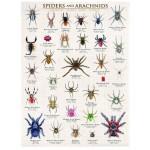 Puzzle  Eurographics-6000-0041 Spinnen und Spinnentiere