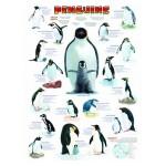 Puzzle  Eurographics-6000-0044 Pinguine