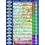 Puzzle  Eurographics-6000-0080 Die Evolution