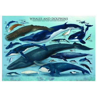 Puzzle Eurographics-6000-0082 Delfine und Wale