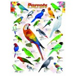 Puzzle  Eurographics-6000-0126 Papageien