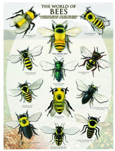 Puzzle Eurographics-6000-0230 Die Welt der Bienen