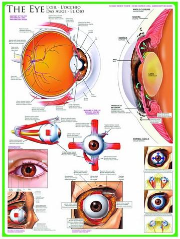 Puzzle Eurographics-6000-0260 Das Auge