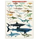 Puzzle  Eurographics-6000-0264 Gefährliche Haie