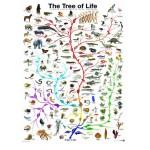 Puzzle  Eurographics-6000-0282 Die Evolution - Der Baum des Lebens