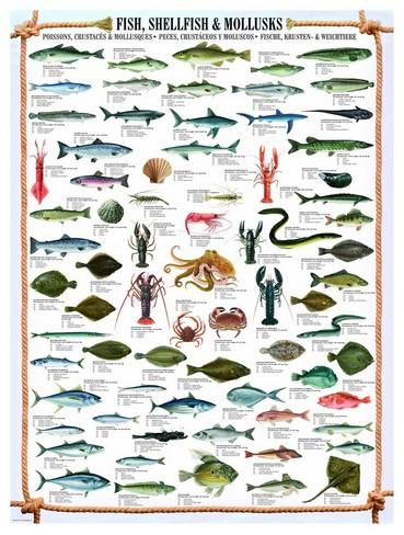 Puzzle Eurographics-6000-0314 Fische, Krusten und Weichtiere