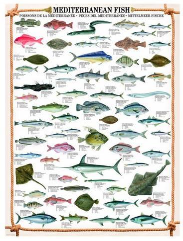 Puzzle Eurographics-6000-0315 Mittelmeerfische