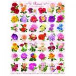 Puzzle  Eurographics-6000-0593 Rose