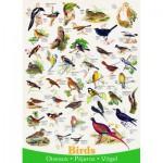 Puzzle  Eurographics-6000-1259 Vögel (englischer Text)