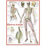 Puzzle  Eurographics-6000-2014 Skelettsystem