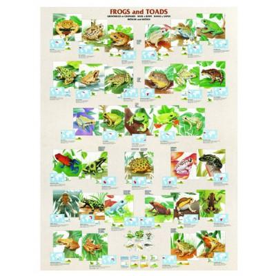 Puzzle Eurographics-6000-2760 Frösche und Kröten