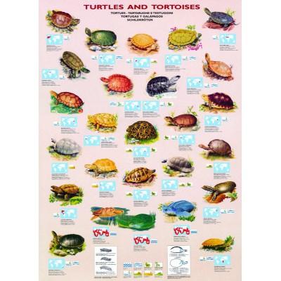 Puzzle Eurographics-6000-3007 Schildkröten