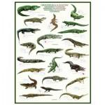 Puzzle  Eurographics-6000-4680 Krokodile und Alligatoren